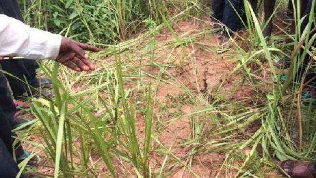 Southern Cameroons Crisis: 2 mass graves with dozens of bodies found in Mamfe